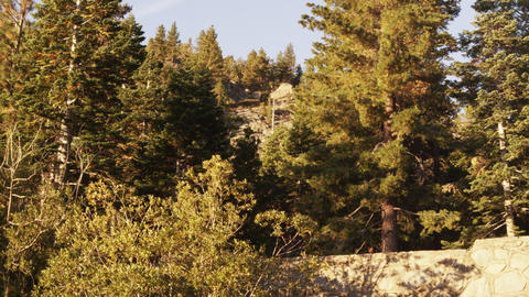 Static shot of coniferous trees near Lake Tahoe, CA Footage