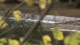 River with waterfall man made with defocus vegetation, pan shot Footage