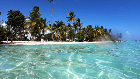 Crystal clear water and palm trees in La Caravelle beach in Guadeloupe Live Action