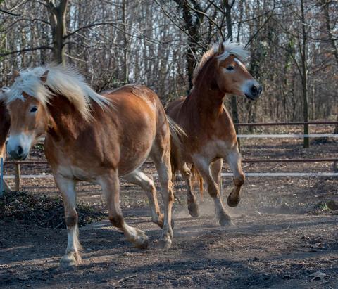 horses run free Fotografía