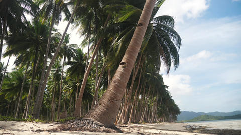 Beautiful tropical beach with many coconut trees and white sand Footage