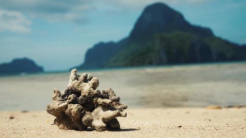 Big dead coral on a tropical beach Footage