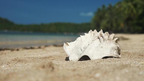 Big sea shell on the beach close up Footage