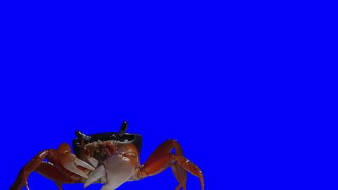Crab Footage