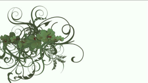growing curly vine & plant background,flower pattern Stock Video Footage