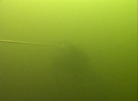 Skin-diver plunges under water Footage
