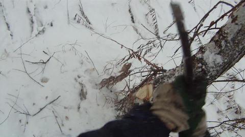 Chop down tree 2 Footage