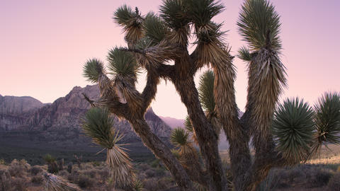 Time lapse of desert dusk falling over joshua tree and distant mountain Footage