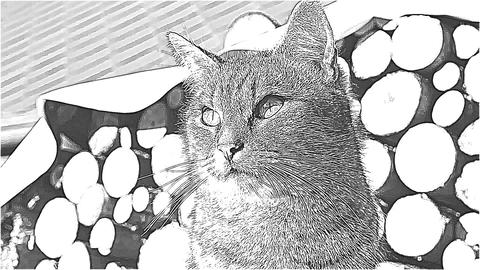Head of the cartoon wild cat Stock Video Footage