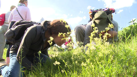 Interested people tourists looking at plants in meadow. Knowledge of nature Live Action
