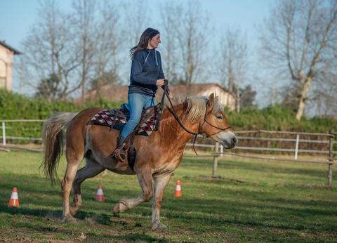 Horses at the riding school Photo