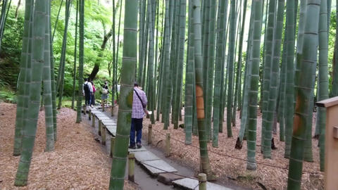 Walking through a Bamboo Forest in Japan - TOKYO, JAPAN - JUNE 17, 2018 Live Action