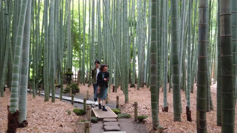 Bamboo Forest in Japan - a wonderful place for recreation - TOKYO, JAPAN - JUNE Footage