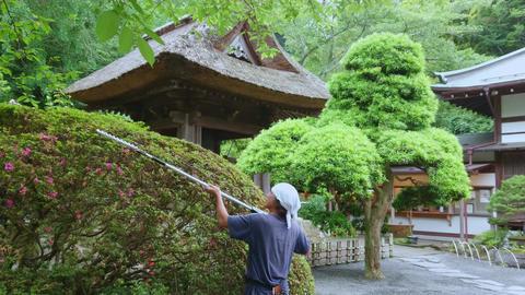Japan style garden in Kamakura - TOKYO, JAPAN - JUNE 17, 2018 Live Action