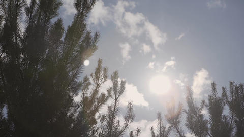 Sun Shining Sunbeams Through Branches And Leaves Of Trees In Pine Forest Footage