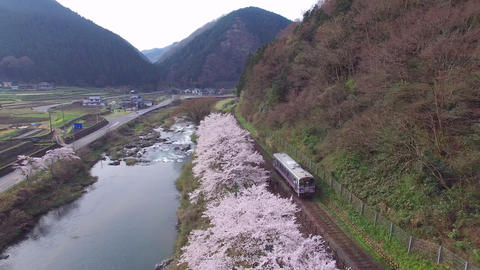 sakura hanami trains さくら並木の絶景を走る列車(4k空撮素材) ビデオ