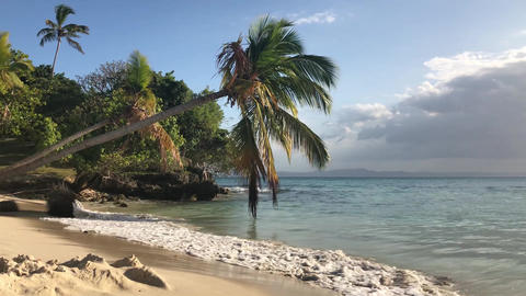 Paradise Island with a palm tree on the ocean in Dominican Republic Footage