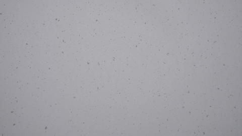 it is snowing against a gray sky Footage