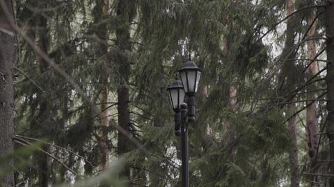 Double vintage lamp on the street. Lantern street light candelabra Footage