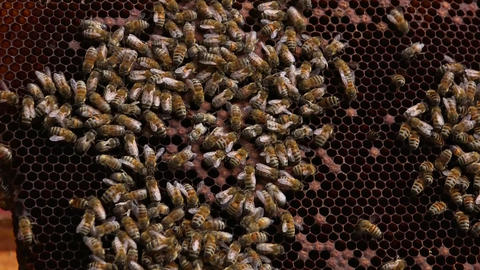 Bees in a Beehive - close up shot Footage