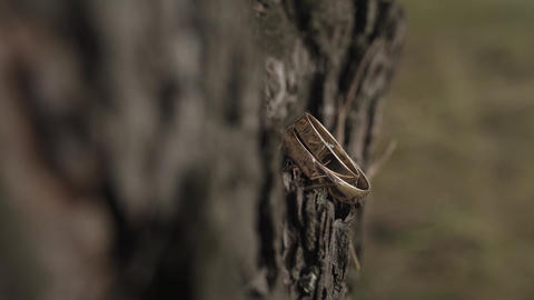 wedding rings on wood. the wedding ring on wood…, Live Action