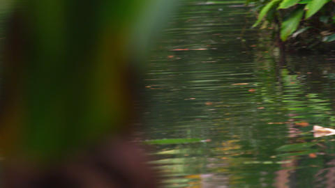 Panning shot of Botanical gardens water and vegetation Footage