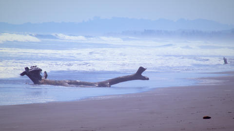 A large branch of driftwood sits on the beach Footage
