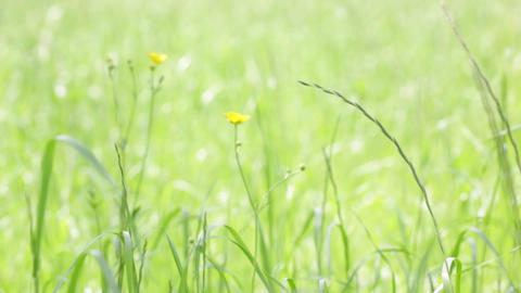 Background of grass in the wind 0002 ビデオ