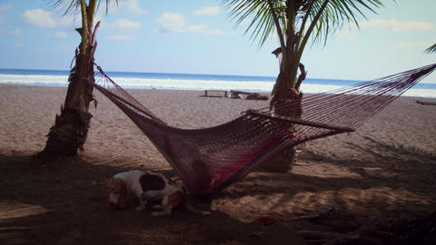 Someone swings in a hammock and looks at beach with dog Footage