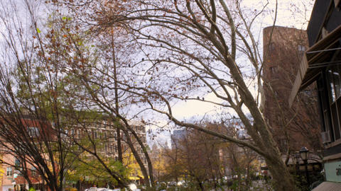 Tilt shot from central park of trees and buildings Footage