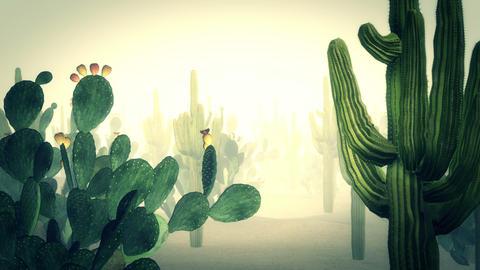 Cactus the Desert Videos animados