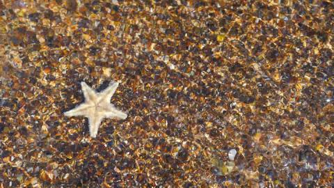 Starfish closeup view Footage