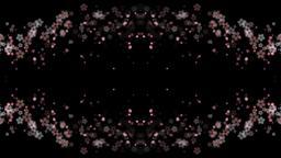 cherry blossom background sakura Stock Video Footage
