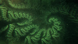 Beautiful Abstract Green Fractal Spiral Slowly Morphing… Stock Video Footage