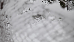 covered fence snow after snowfall Footage