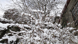 branches of trees covered with snow after snowfall Footage