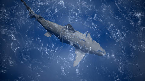 Shark view from above water Footage