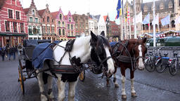 Belgium Bruges horse and carriage for tourists on Grote Markt square GIF