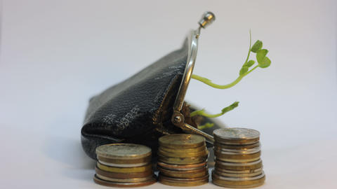 Golden coins and purse with young plant growing and dying. Money growth increase ビデオ
