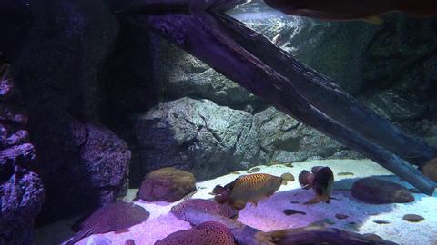 underwater world with marine life. fish swim at the bottom Footage