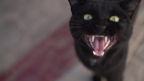Black cat muzzle when he says meow close up in slow motion Footage