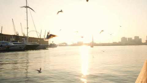 woman in silhouette feeds seagulls at the ancient port of Genoa at sunset GIF