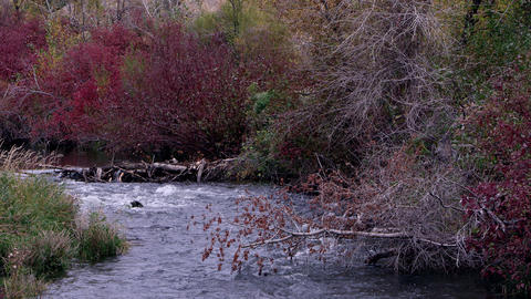 Shot of some river with autumn foliage all around Footage