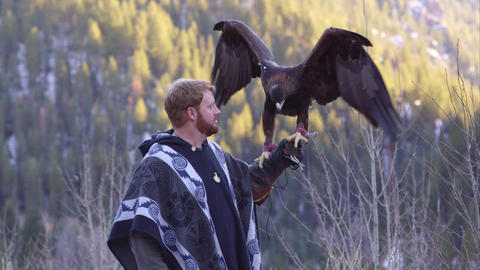 Golden eagle perched on falconer's glove Footage