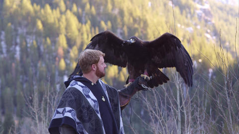 Golden eagle perched on falconer's arm Footage