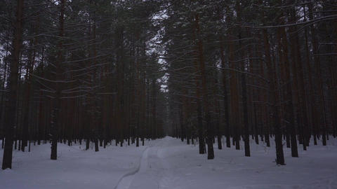 Winter forest in snow parallax effect Footage