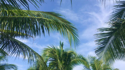 Skyline with clouds and palm tree branches in jungle traveling tour Footage