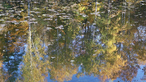 Autumn trees reflecting in water Footage