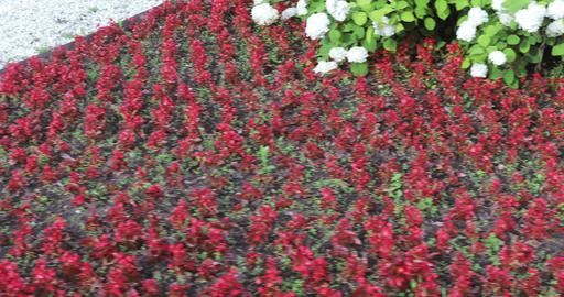 Landscape design flower beds in the park Live Action