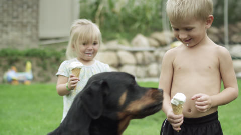 Young girl and boy with icecream cones as the dog eats the boy's icecream Live Action